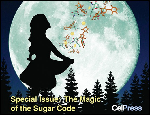 The Magic of the Sugar Code