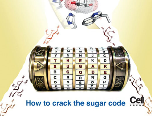 Principles of the Sugar Code